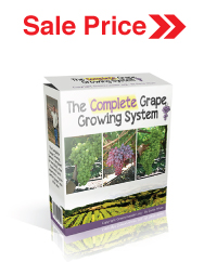 Complete Grape Growing Sale Price